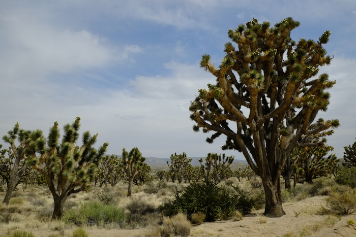 Mojave0505-2.jpg