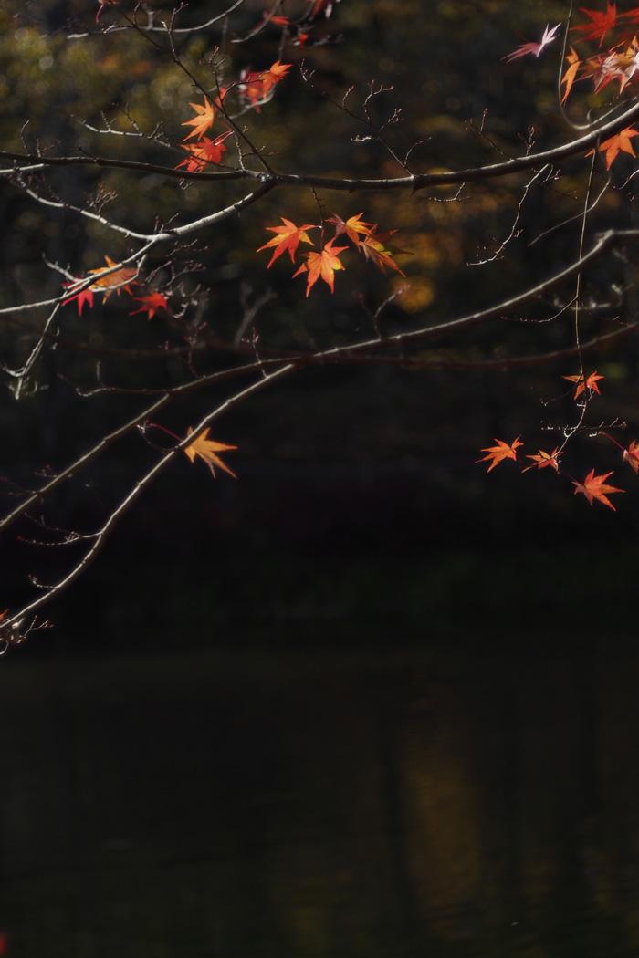 karuizawa20121104-3.jpg